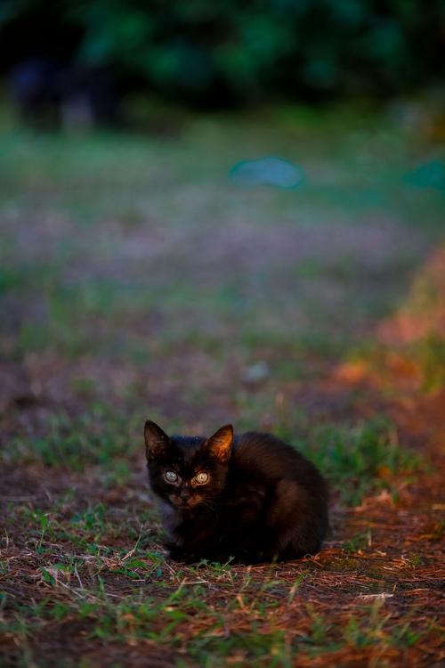临近傍晚,偶遇一只小可爱🐱