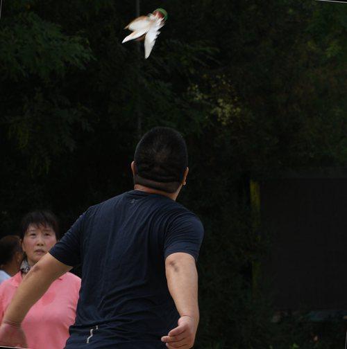 学习小燕儿飞