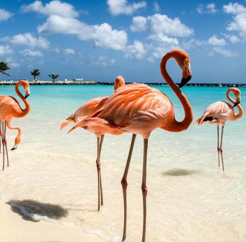 海滩上的大长腿火烈鸟
