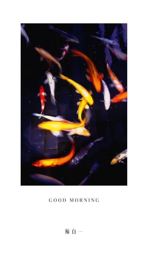 早 安 锦 鲤