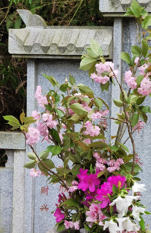 过年时去看他,带了很多花。